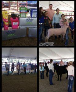 Cover photo for Onslow County Farm Bureau Livestock Showdown (CANCELED)