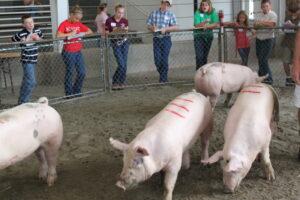 Cover photo for Livestock Judging & Skillathon Clinics